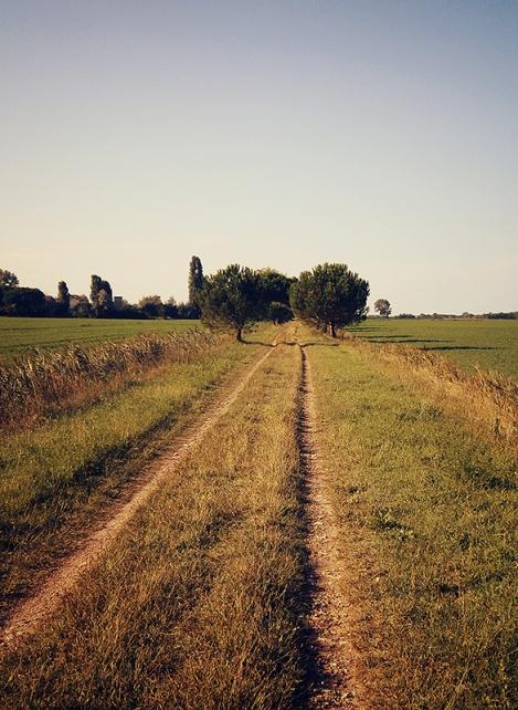 Un sentiero alberato